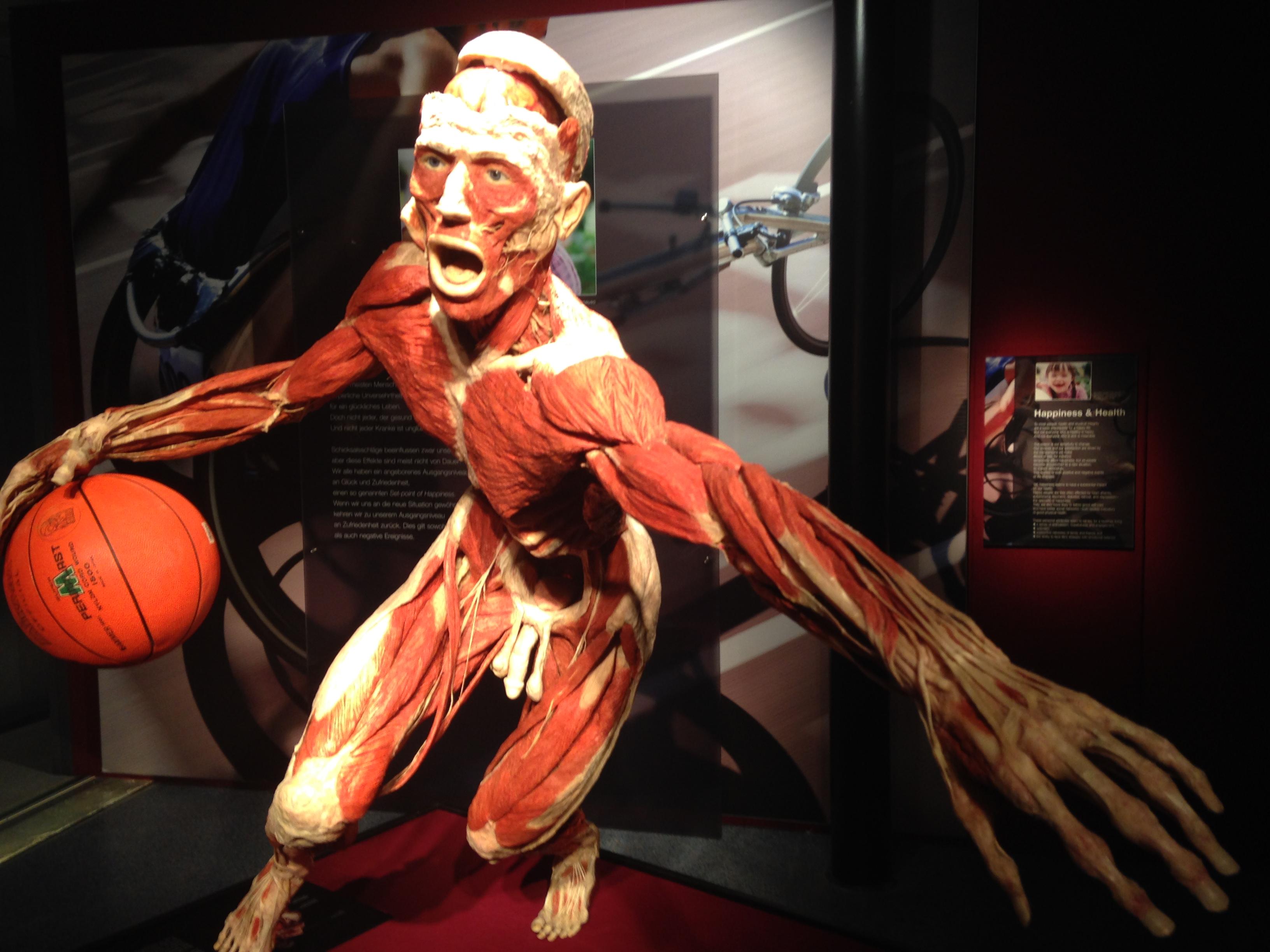 Berühmt Anatomie Aktuelle Ereignis Bilder - Menschliche Anatomie ...