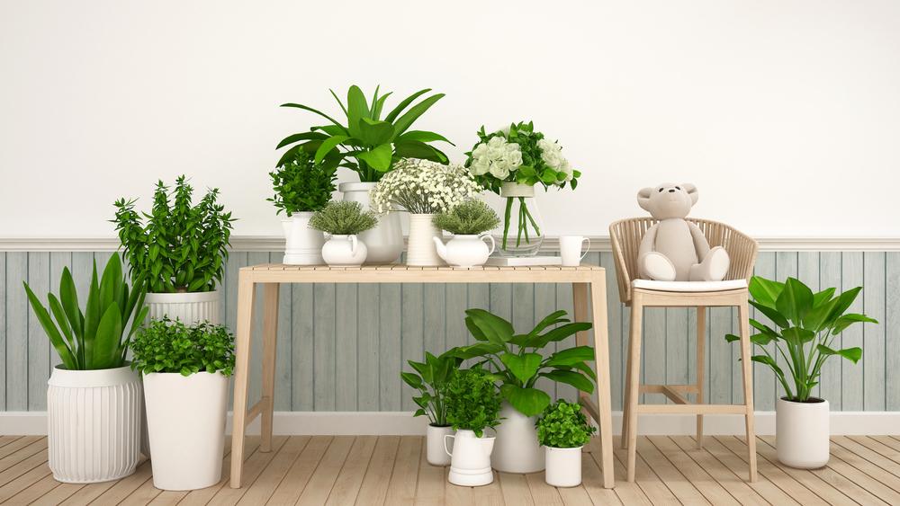 pflanzen gef hrlich f r hund und katze radio regenbogen. Black Bedroom Furniture Sets. Home Design Ideas